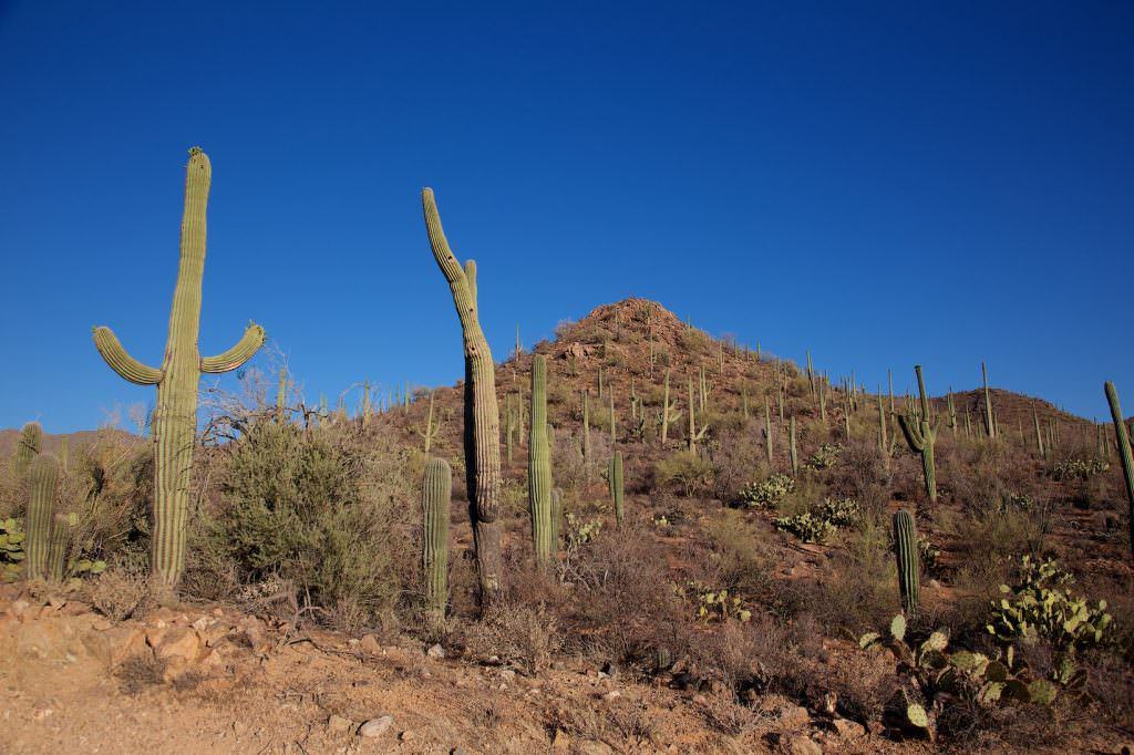 Saguaro NP - West