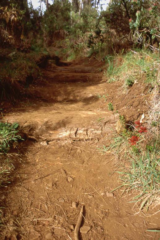 Hosmer Grove Trail