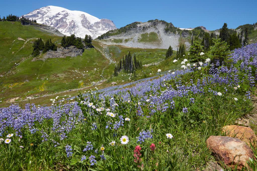 Washington: Mount Rainier, Skyline Trail